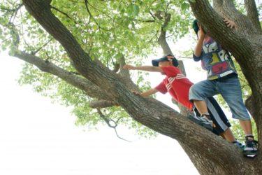 木登りをするやんちゃな兄弟
